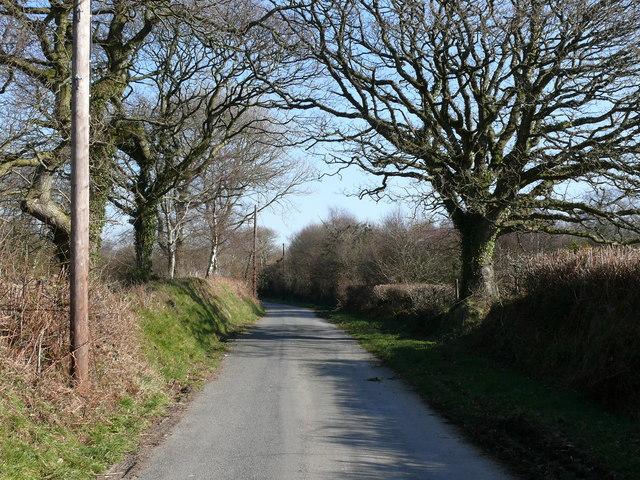 Lon goediog ger Aberarth / Wooded lane near Aberarth