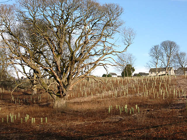 New tree planting at the Haining Estate