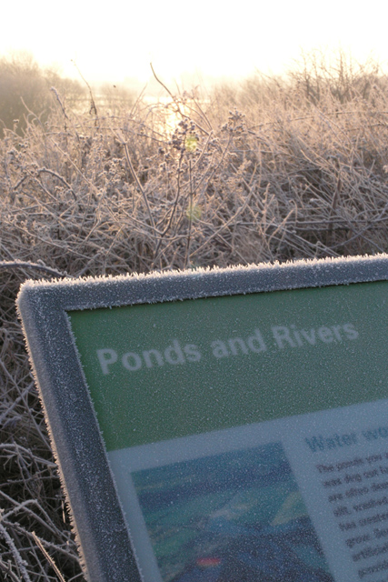 Frosted information, Attenborough Nature Reserve