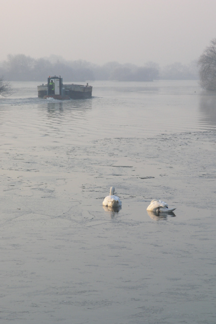 Barge,Tug, and swans Attenborough nature reserve