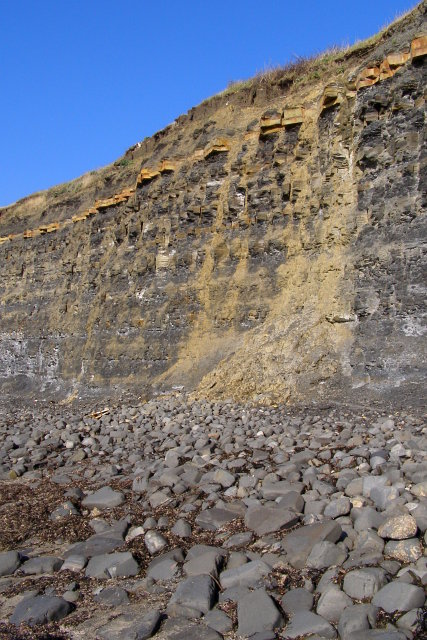 Cliff face west of Gaulter Gap, Kimmeridge Bay