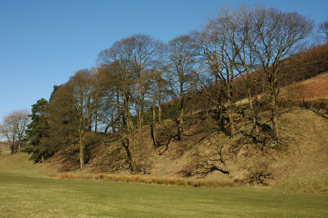 Trees on the lower slopes of Yarnshaw Hill