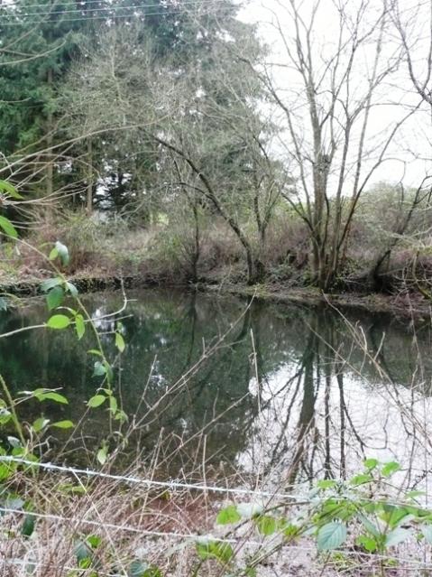 Fish pond or reservoir