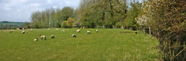 Farmland with sheep, Bourton on the Water, Gloucestershire