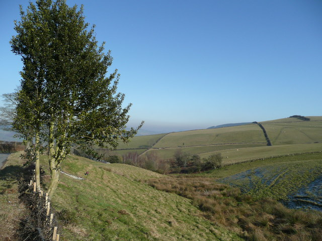 Holly on the lower slopes of Rockhill