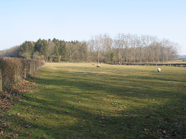 Pasture and small wood north of Argus Farm