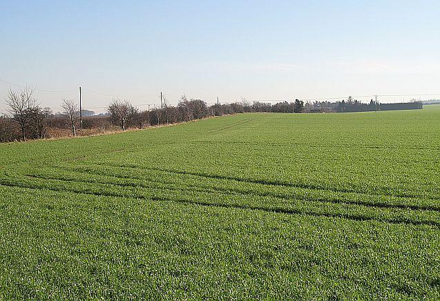 Winter crops, Drem