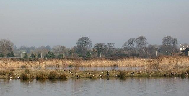 Wildfowl lake near the racecourse