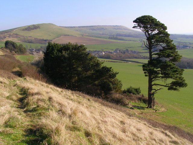 Trees on the south side of the ridge, west of Kimmeridge