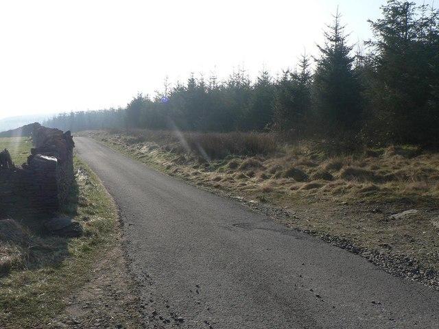 Llanwonno: road alongside forest