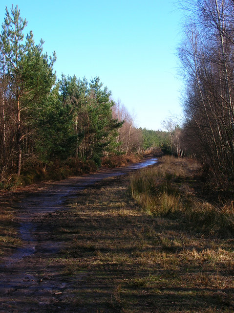 Track, Hargate Forest