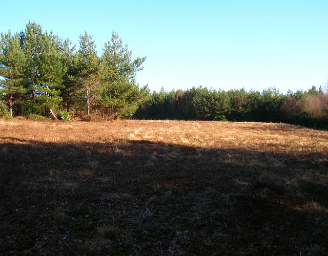 Cleared Area, Hargate Forest