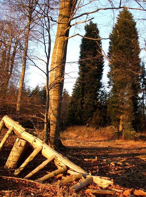 Millfield Wood