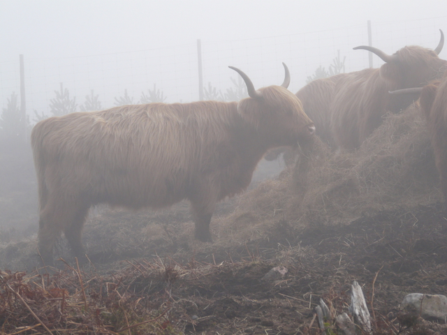 Moos in the mist!
