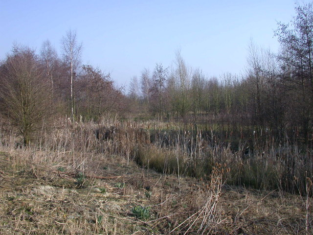 Bulrushes and woods by Cottenham Lode