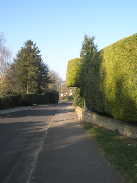 A hedge as partial bridge