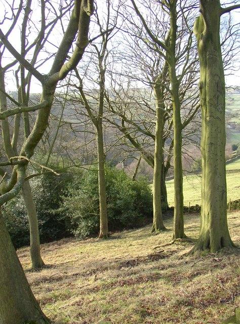 Wood pasture, Stainland