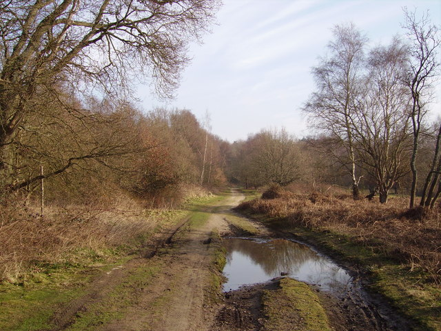 Track on Hawley Common