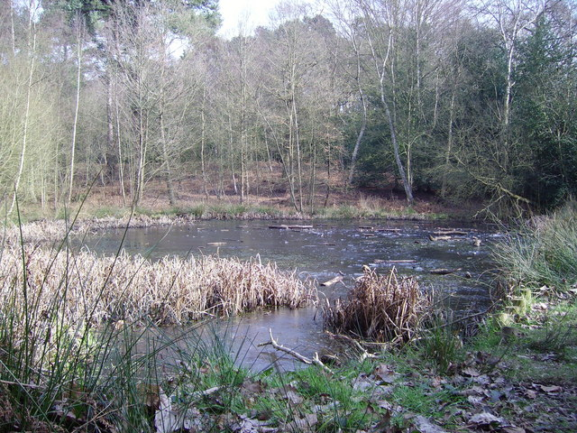 The pond at the bottom of Finchampstead Ridges