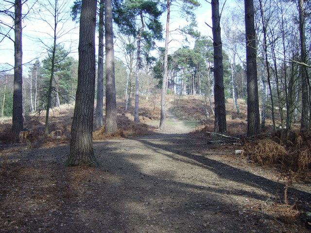 Path leading back up to Finchampstead Ridges