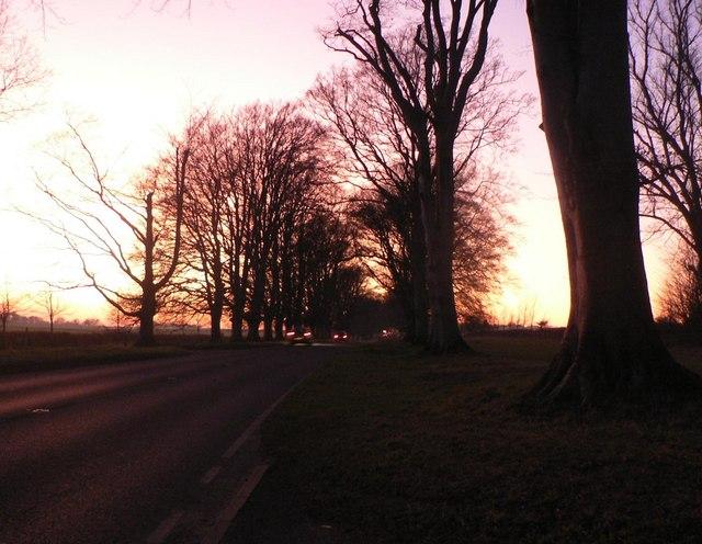 Kingston Lacy: dusk on the B3081