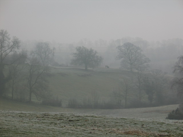 View across to Covert  on a frosty day