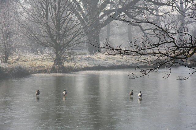 Duck skating