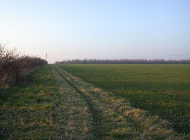 Permissive footpath and wheat field