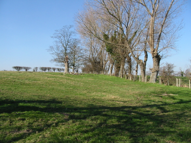 Old trees marking a field boundary