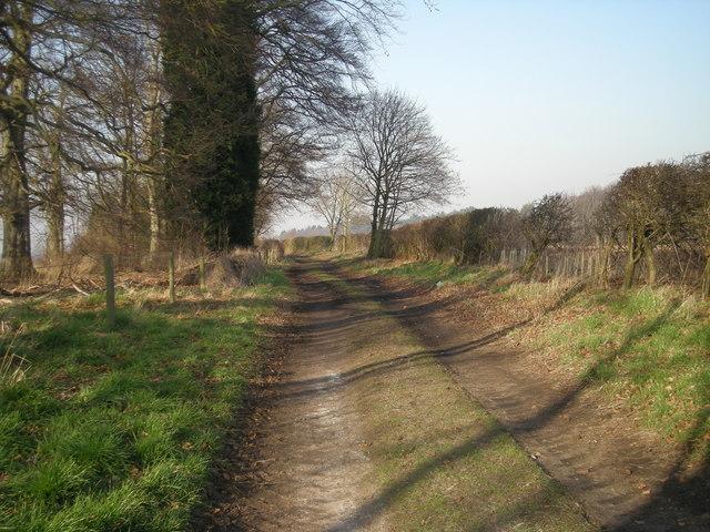 Farm Track near Dingle Plantation