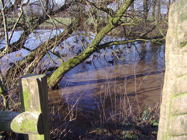 Duck Pond, Gib Lane, Hoghton