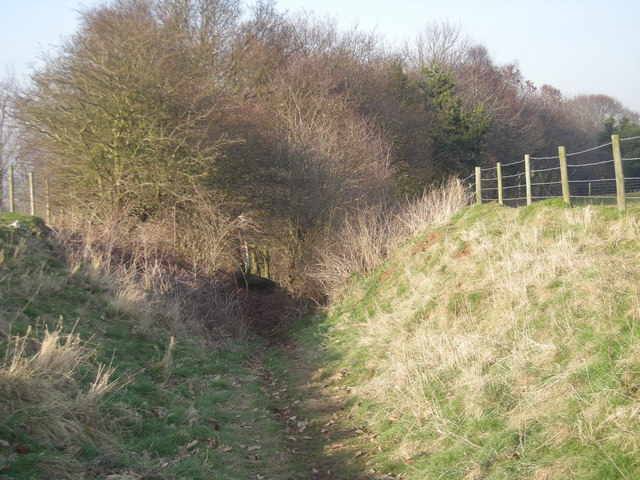 Footpath emerging from the woods