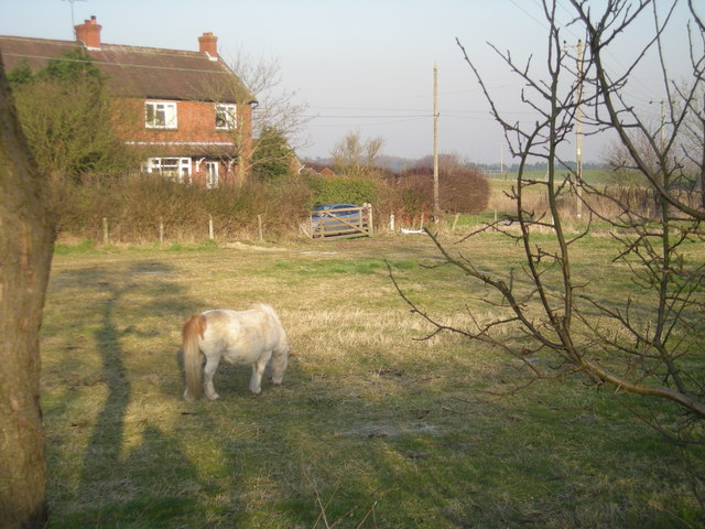 Grindle: Shetland pony in a paddock.