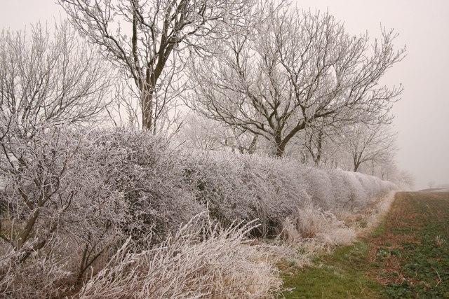 Frosty hedgeline