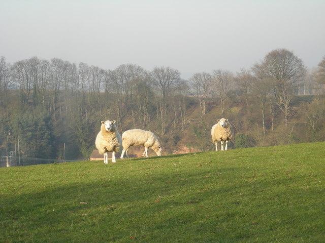 The Ewe Sisters at Grindleforge
