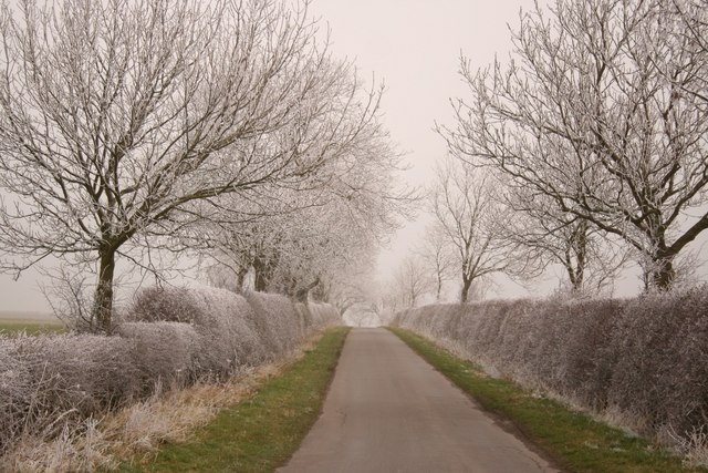 Frosty on the Wolds