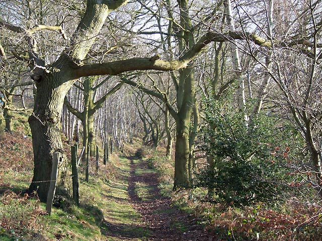 Bridleway on Abbot's Castle Hill, Staffordshire