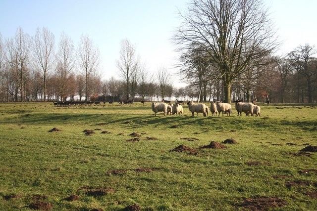 Herd and Flock