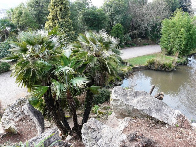 Palm trees and pond, Oldway mansion, Paignton