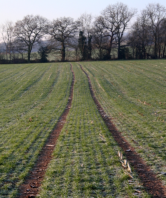 Tramlines through the Crops