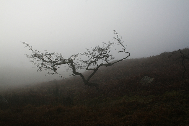 Leafless Tree in Mist at Scales
