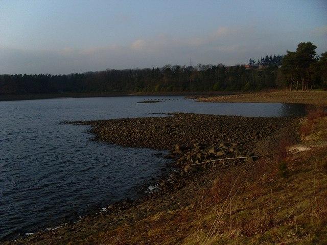 The northern bank of Craigmaddie Reservoir