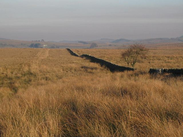Bridleway towards Benks Hills
