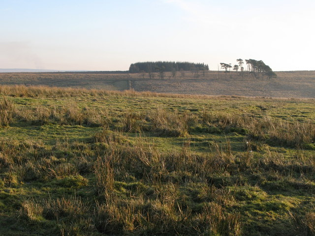 North Plantation