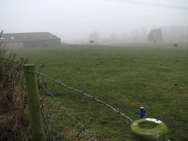 View across cattle pasture