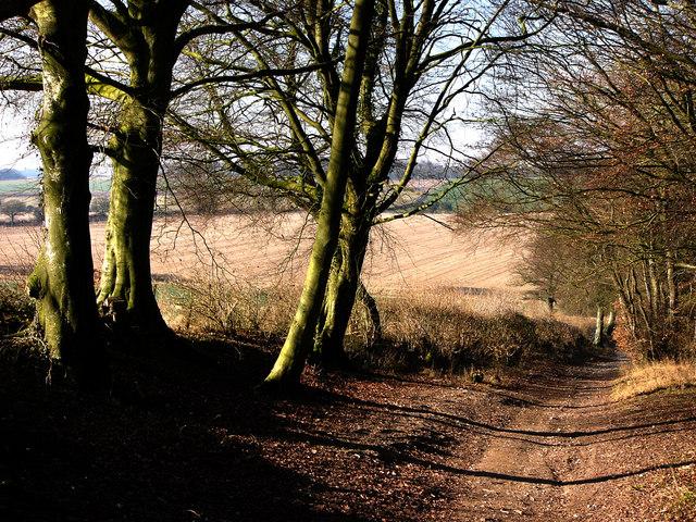 Alresford Lane by Cheriton Wood