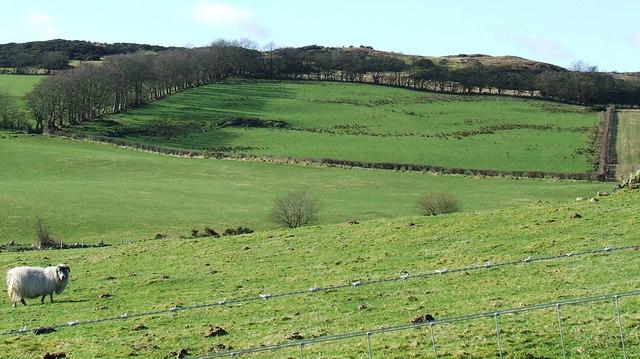 Farmland near Priestside Farm