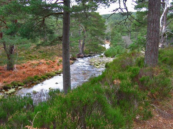 Water of Allachy, Glen Tanar