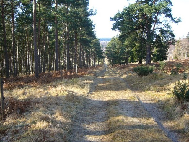 Forest track in Craigmore Wood