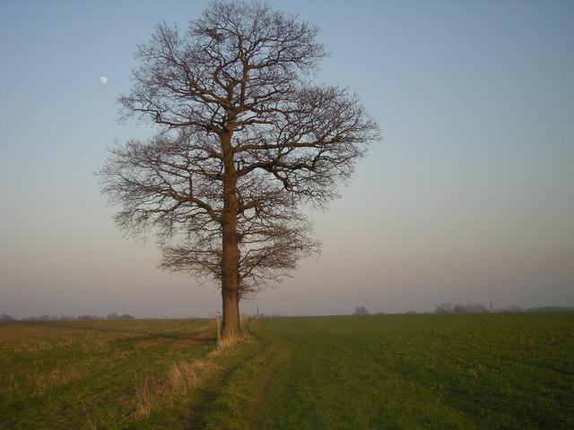 Path across the fields